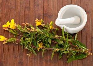 Nachtkerzenöl – wertvolle Fettsäuren für eine gesunde Haut