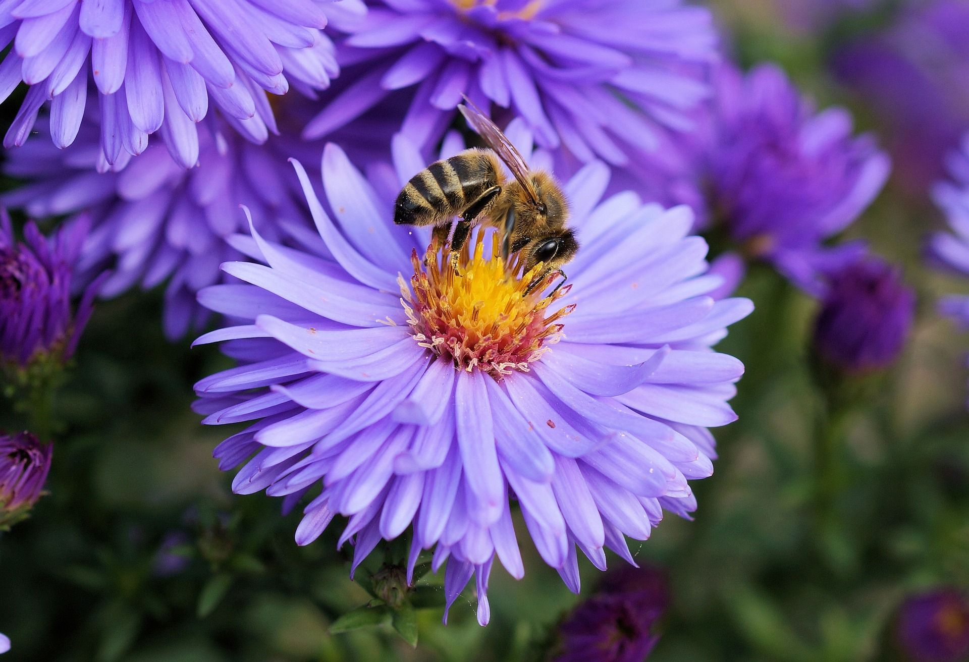 Gelée Royal – Hauptnahrungsmittel der Bienenkönigin