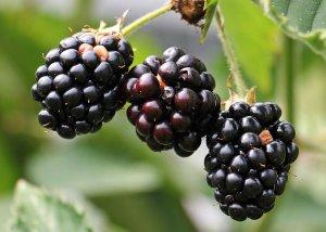 Was sind Flavonoide?