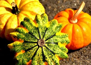 Der Kürbis - das Superfood für den Herbst!