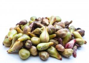 OPC Traubenkernextrakt – was ist dran an der Kraft der Traubenkerne?