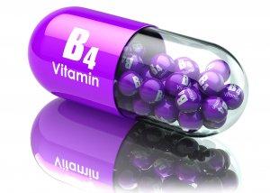 Alles rund um Vitamin B4