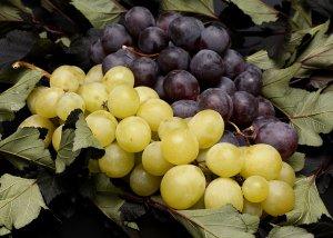 Rote und weiße Weintrauben - Unterschied und Eigenschaften von Weintrauben
