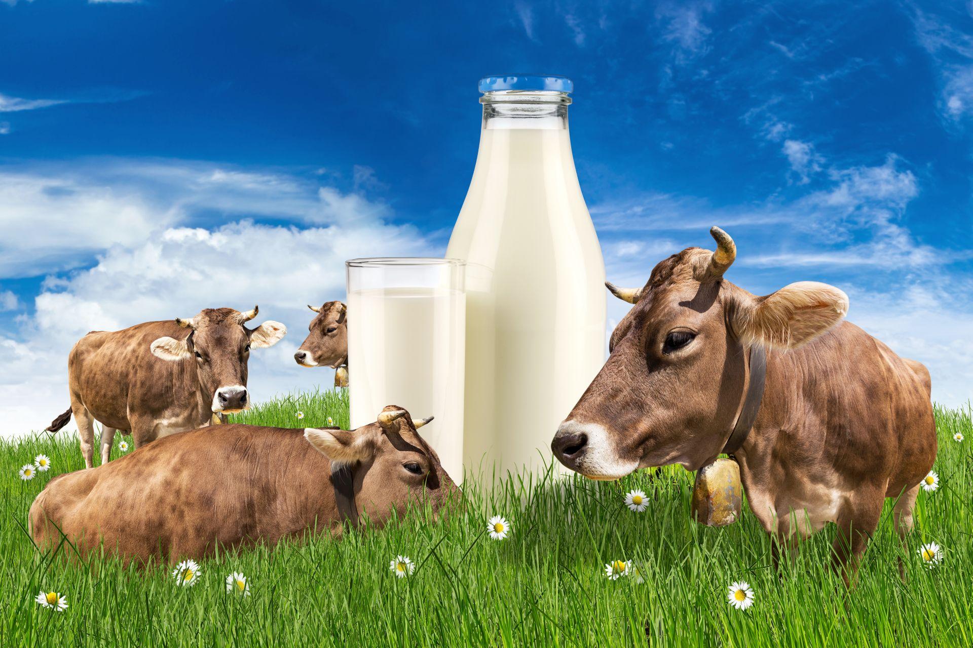 Molkenprotein ist ein Bestandteil von Säugetiermilch