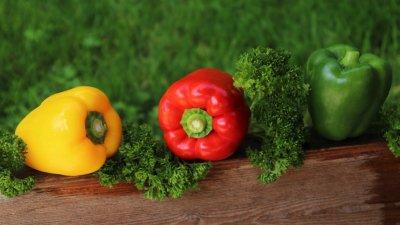 Die Paprika ist eine wahre Vitaminbombe