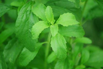 Stevia ist eine Alternative zu Zucker