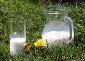 Laktobakterien - gute Bakterien für eine gute Verdauung